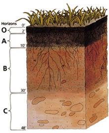 Bodenprofil Quelle: PD-USGov-USDA