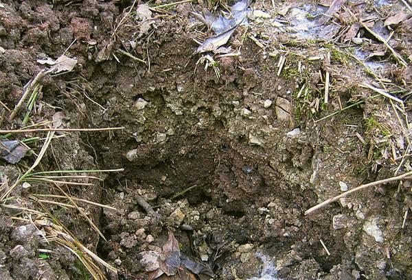 Kalkboden im Satzer Moor Quelle: bdk