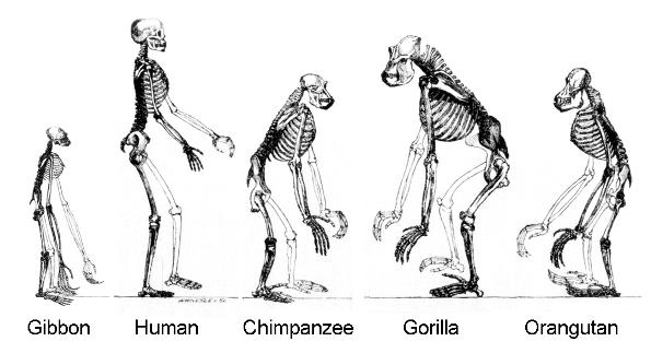 2_6_3_Evolutionstheorien