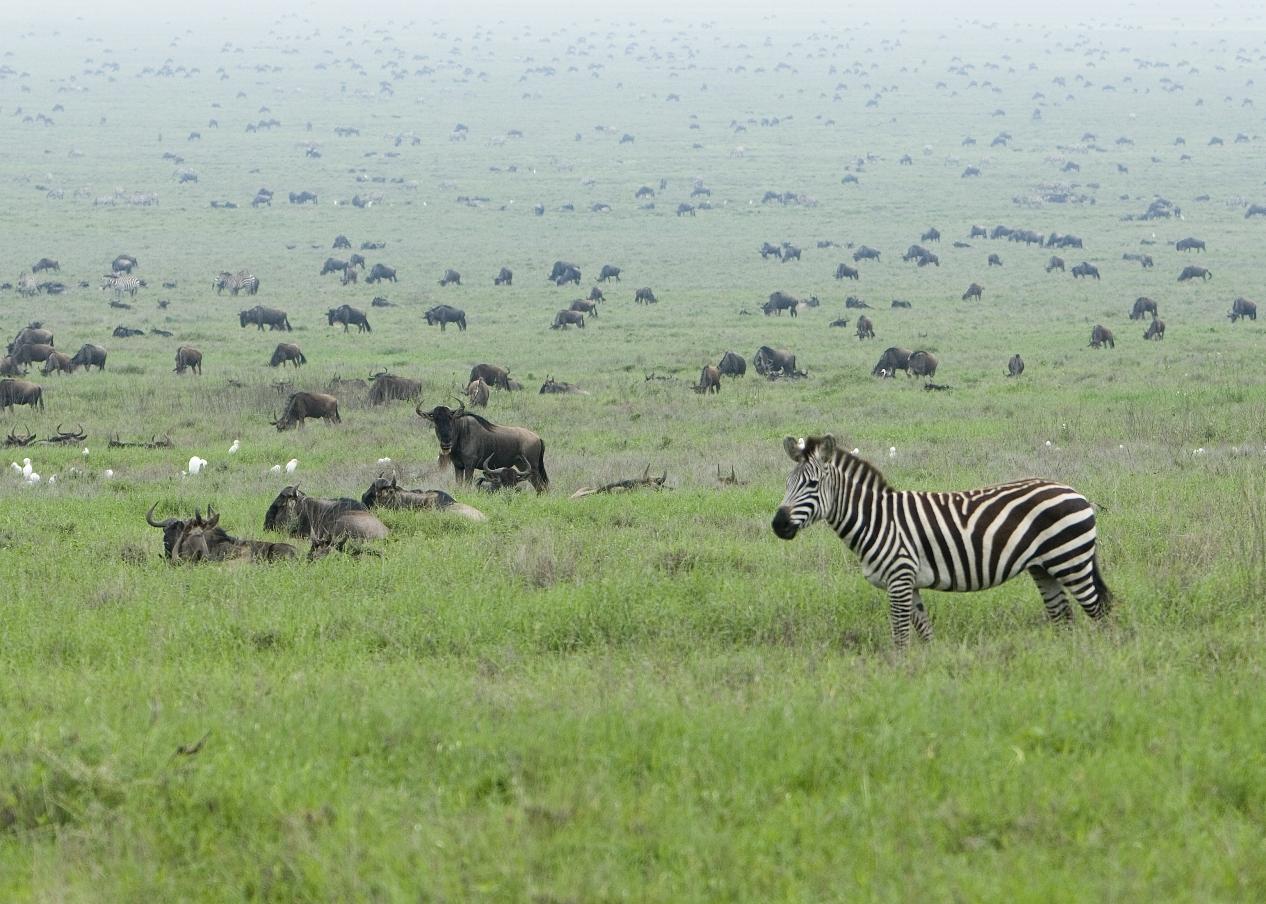 ... geschafft! Willkommen in der Massai Mara. (Quelle: David Dennis, CC BY-SA 2.0)