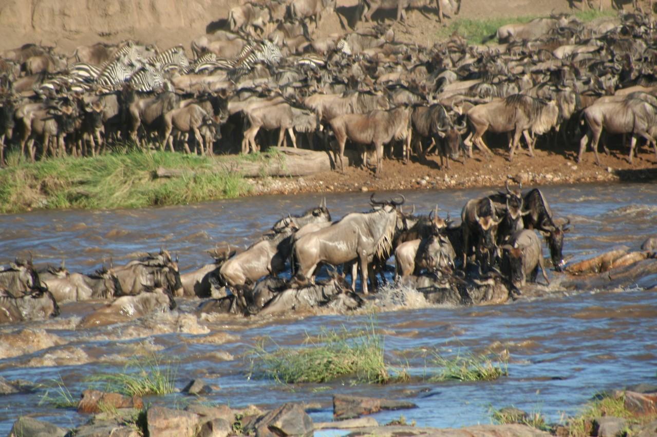 Die Überquerung des Mara Rivers (Quelle: Stefan Swanepoel, CC BY-CA 3.0)