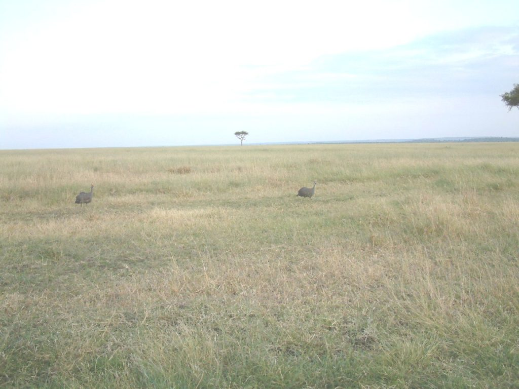 Savanne, Serengeti (Quelle: Ralf Krüger)