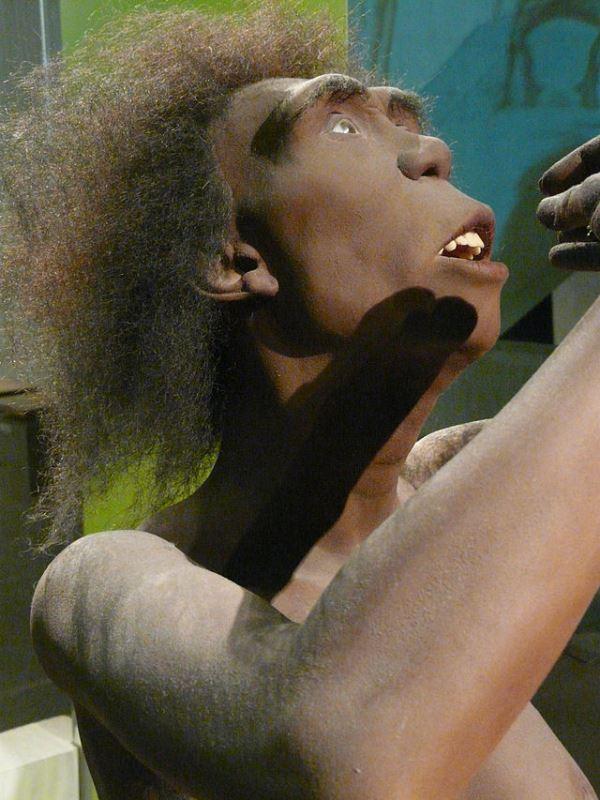 Homo Erectus (1,8 - 0,2 Mio. v. Chr.)