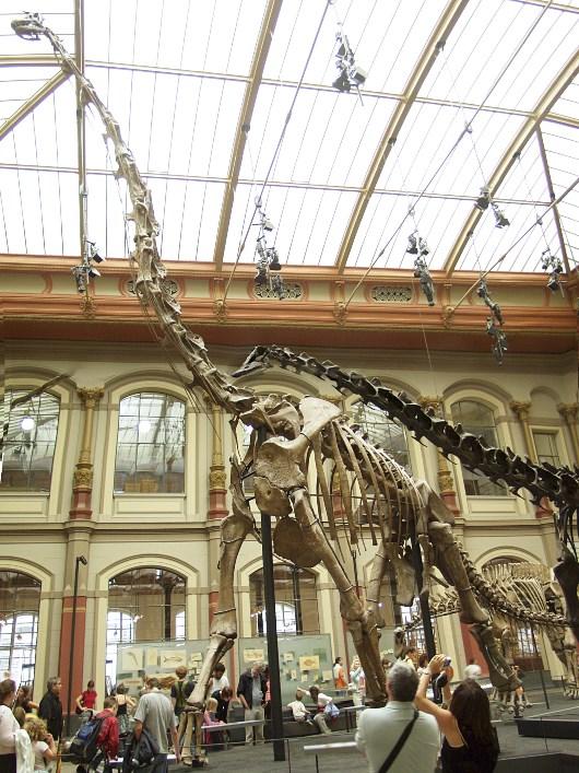 Giraffatitan im Berliner Naturkundemuseum Quelle: R. Spekking (CC-BY-SA 4.0)