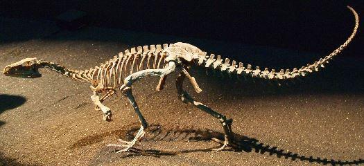 Echsenbecken vom Eoraptor Quelle: K. Ohno (CC BY-SA 2.0)
