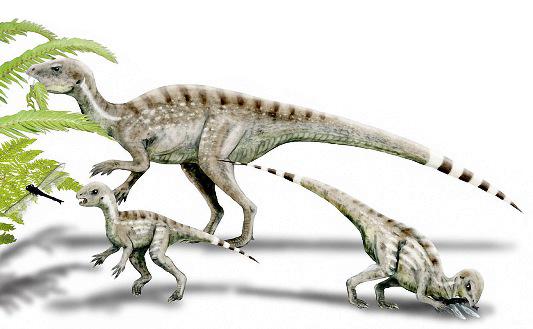 Rekonstruktionsbild vom Heterodontosaurus Quelle: N.Tamura (CC BY-SA 3.0)