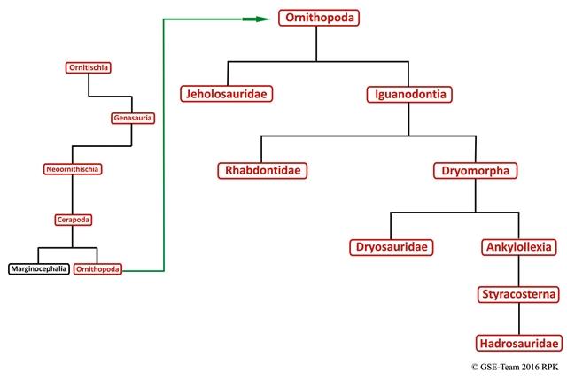 Kladogramm: Familie der Ornithopoda
