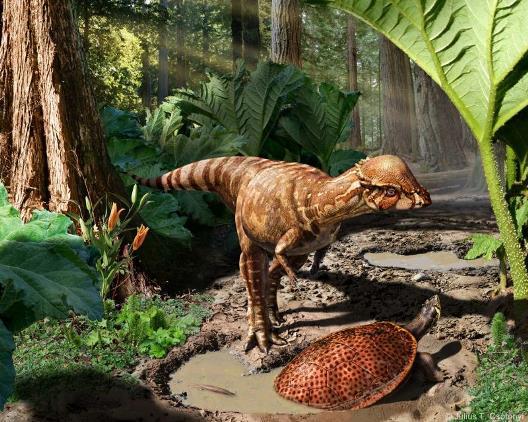 Rekonstruktionsbild der Familie Pachycephalosauridae Quelle: J. Csotonyi (CC BY-SA 4.0)